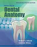 Image of the book cover for 'Woelfel's Dental Anatomy'
